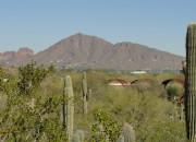 View of Camelback Mountain: Desert Botanical Garden--www.wildtalesof.com