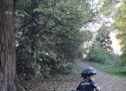 5 Quick Tips for New Balance Bikers | WildTalesof.com