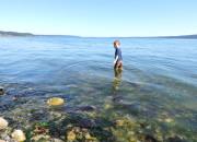 Camano Island, Washington   WildTalesof.com