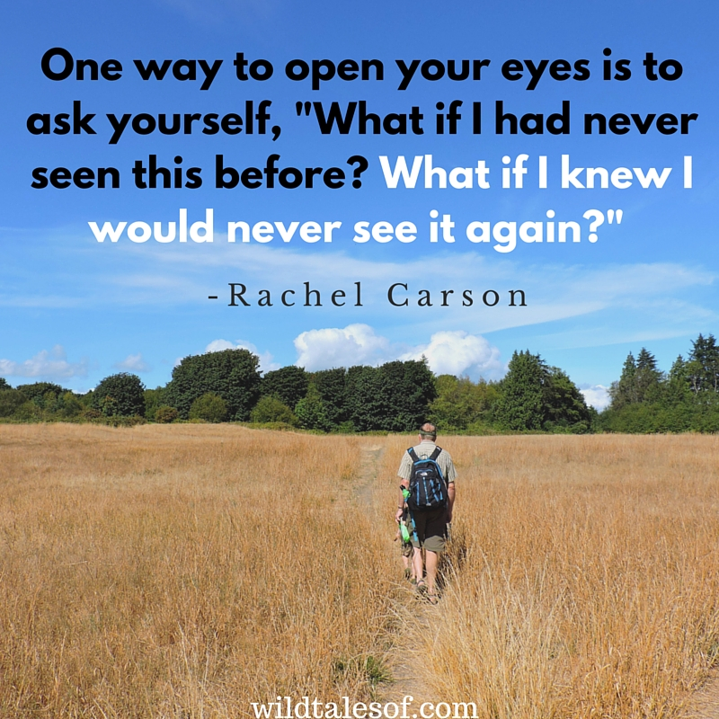 One way to open your eyes... | WildTalesof.com