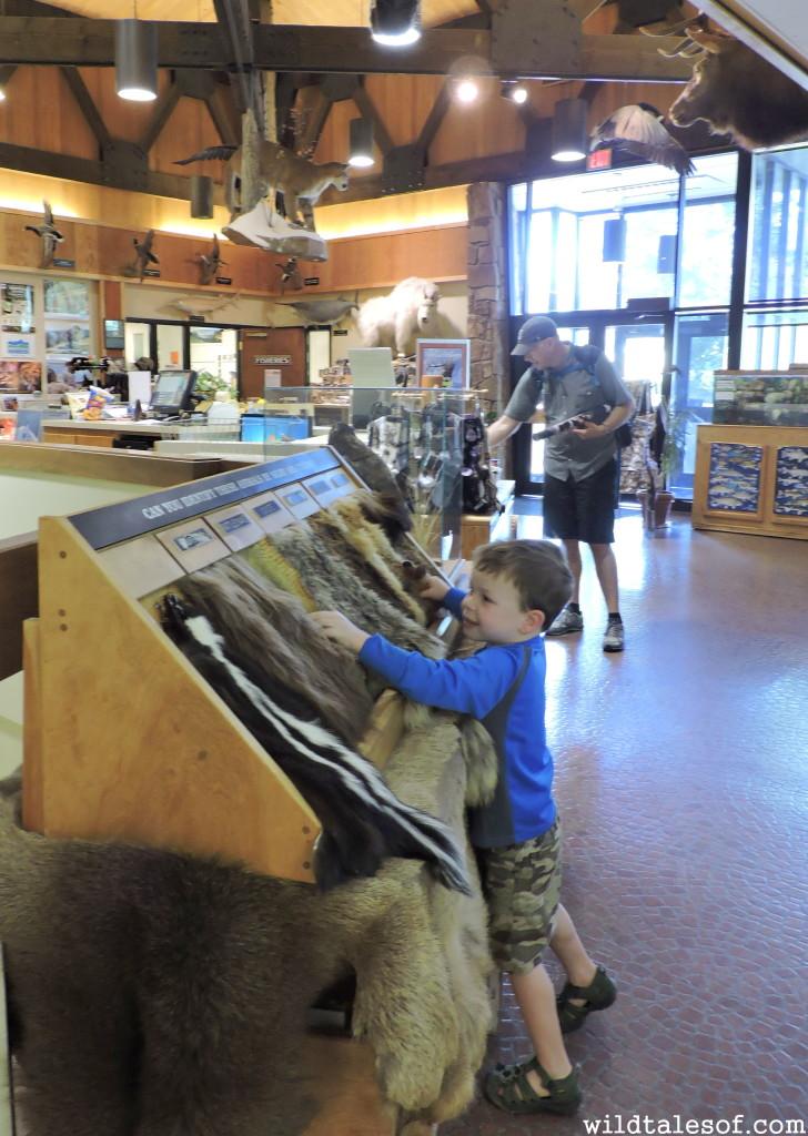 Visiting Helena, Montana with Kids | WildTalesof.com