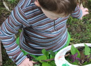 Lessons from Forest School--Seeing More with a Noticer | WildTalesof.com