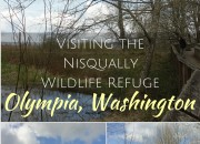 Visiting the Nisqually Wildlife Refuge: Olympia, Washington | WildTalesof.com