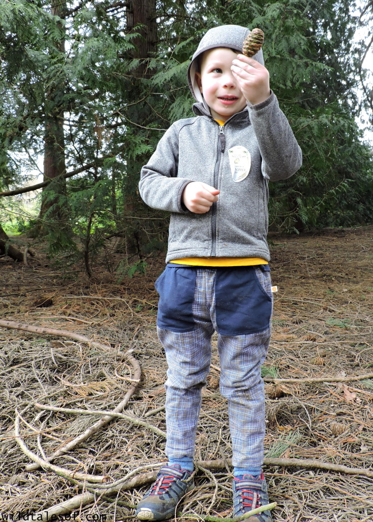 Exploring Nature with Kids: Conifer Cone Search