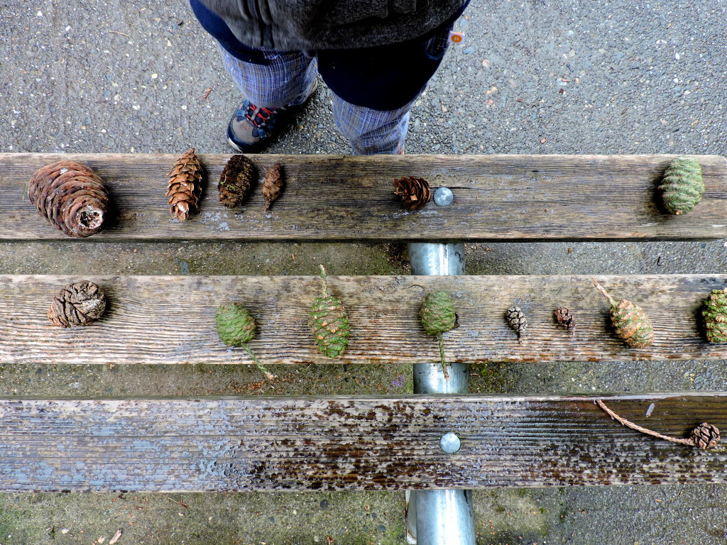 Exploring Nature with Kids: Conifer Cone Search | WildTalesof.com