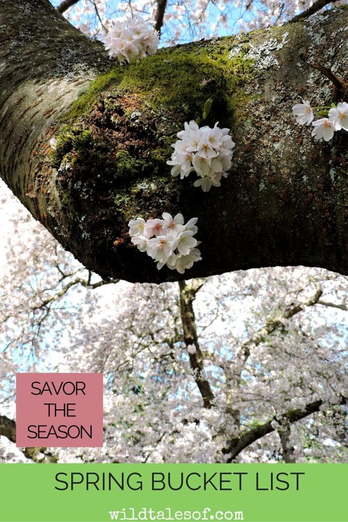 Savoring the Season with a Spring Bucket List   WildTalesof.com