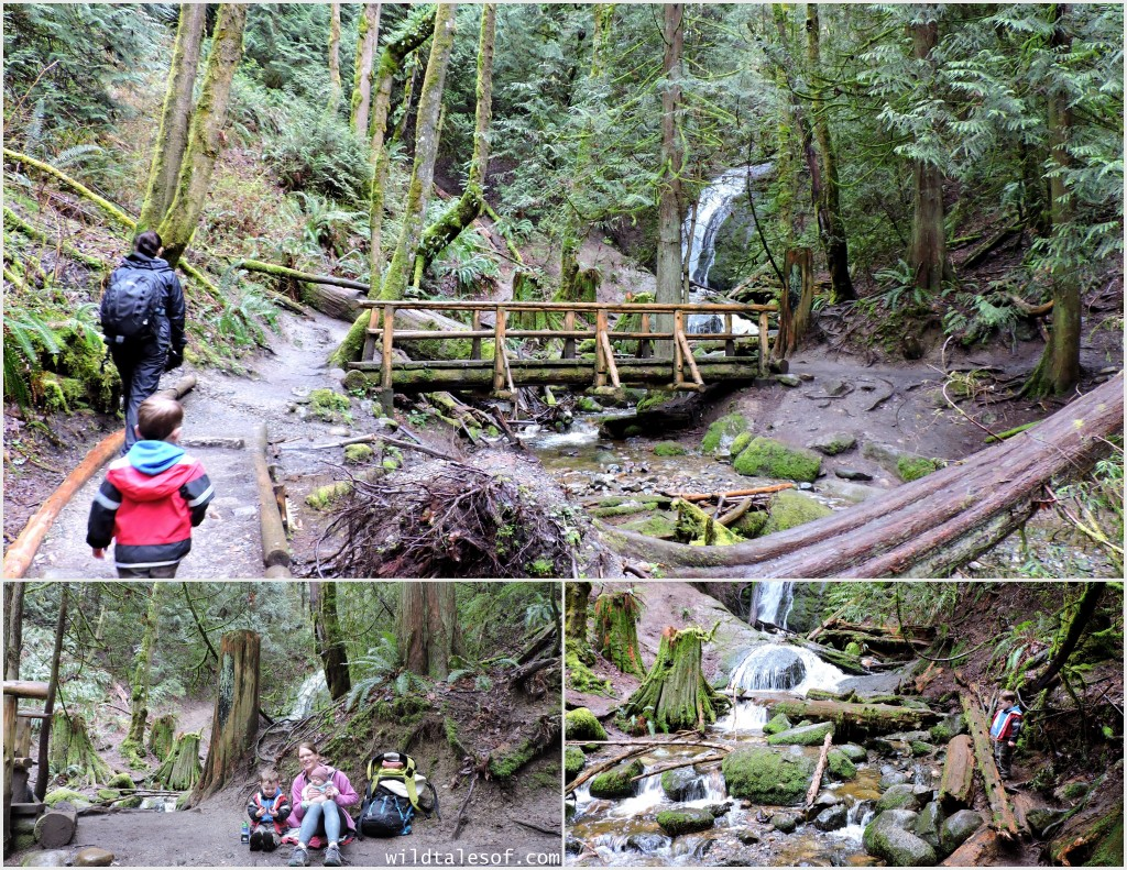 Cougar Mountain's Coal Creek Falls Trail | WildTalesof.com