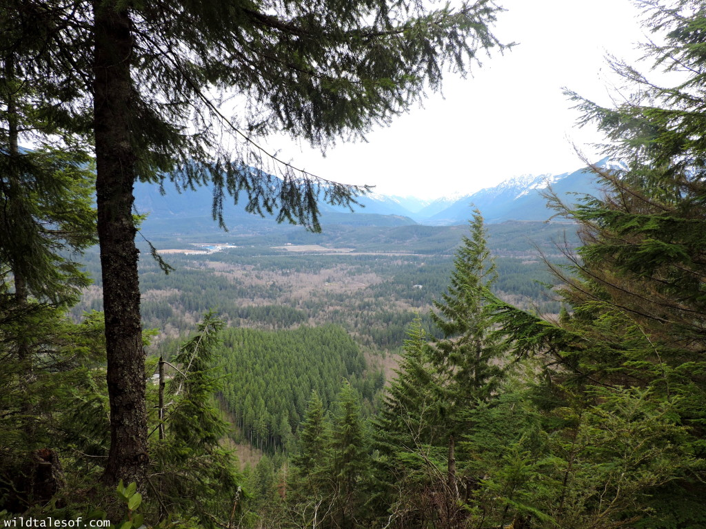 Hiking with Kids: Seattle Area Hikes with Viewpoints--Cedar Butte   WildTalesof.com