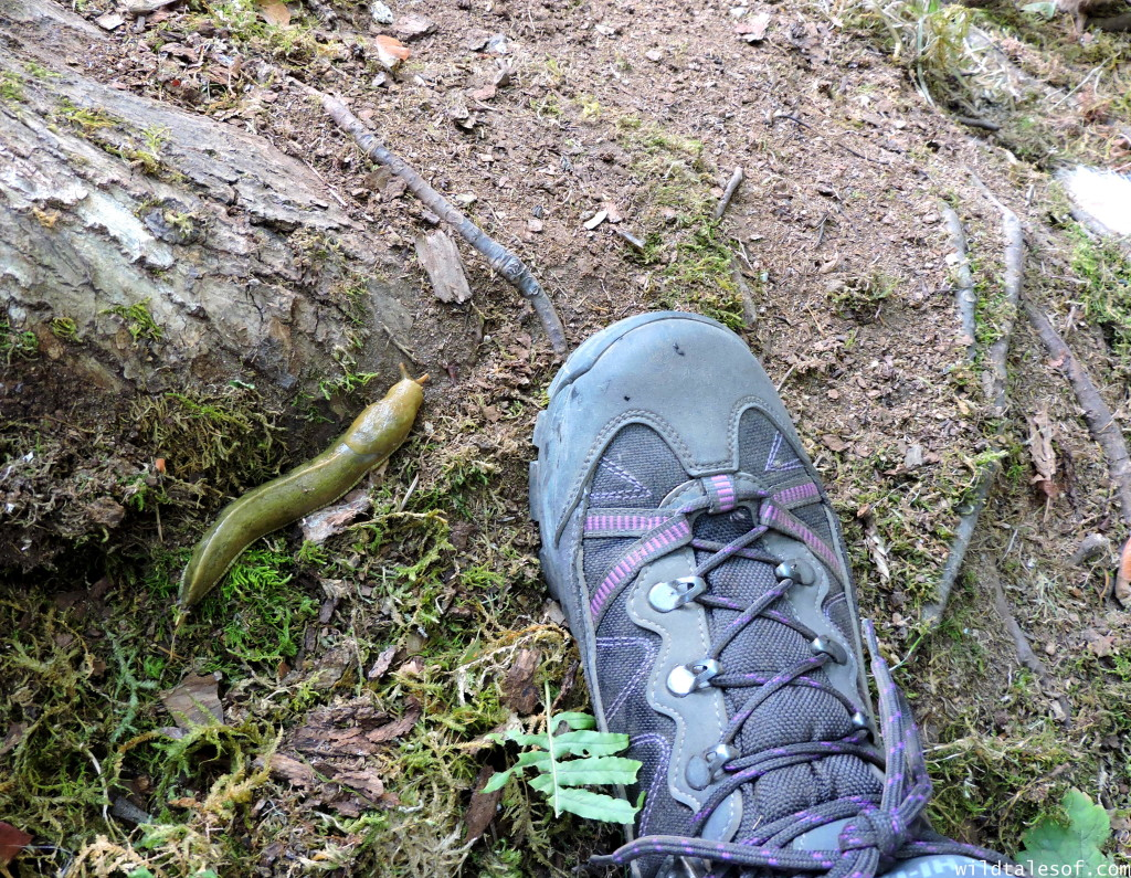 Women's Hiking Boot Review: V-Lite Altitude Pro Lite from Hi-Tec | WildTalesof.com