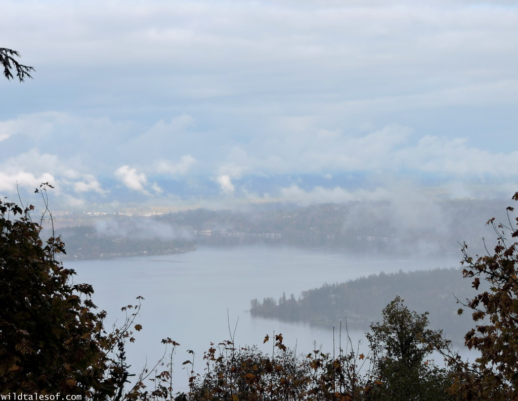 Hiking with Kids: Seattle Area Hikes with Viewpoints--Cougar Mountain's Million Dollar View   WildTalesof.com