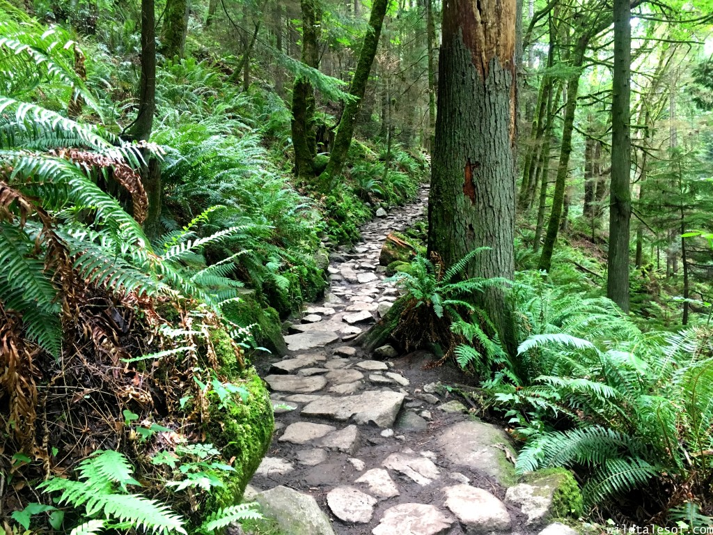 Hiking with Kids: Chirico Trail to Issaquah, WA's Poo Poo Point | WildTalesof.com