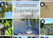 Summer Scavenger Hunt (with Printable) for Kids | WildTalesof.com