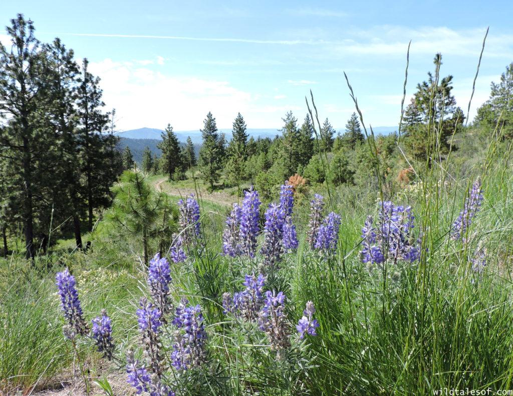 Lake Chelan, Washington: Things to do with Kids | WildTalesof.com