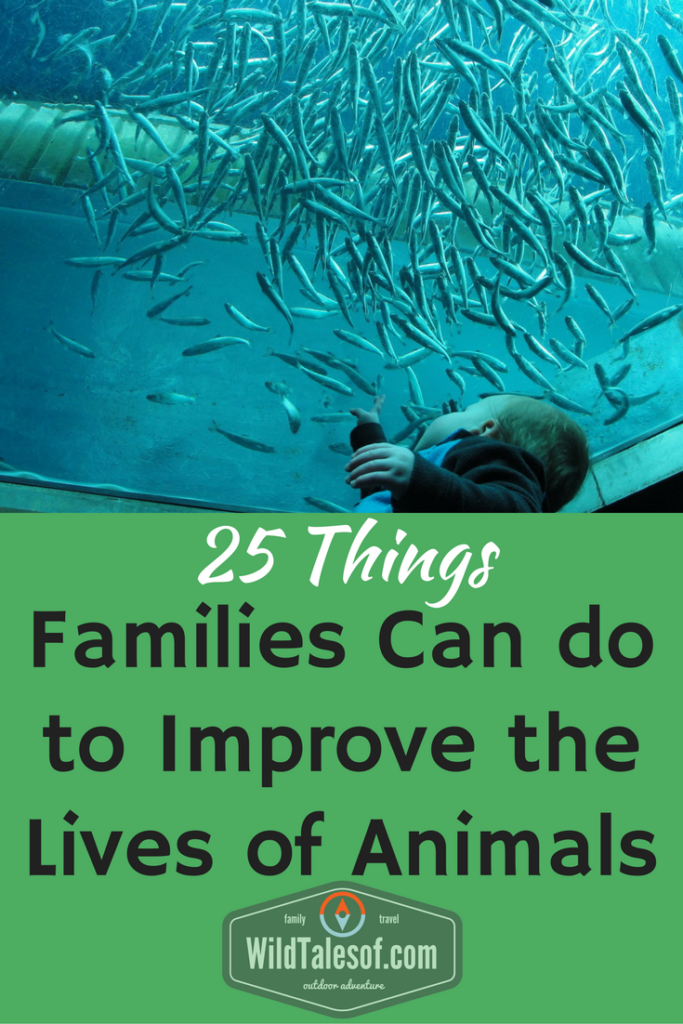World Animal Day: 20 Things Families Can do to Improve the Lives of Animals | WildTalesof.com