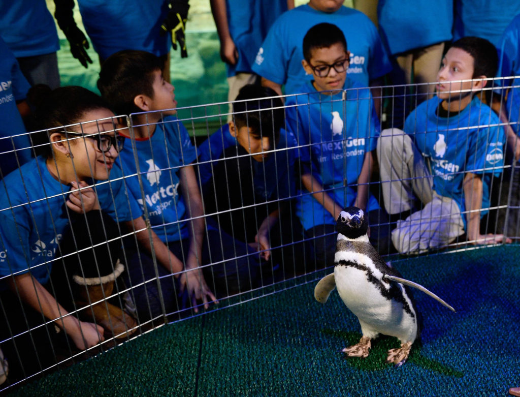 The Next Generation of Animal Responders: Teaching Kids How They Can Make a Difference for Wildlife   WildTalesof.com