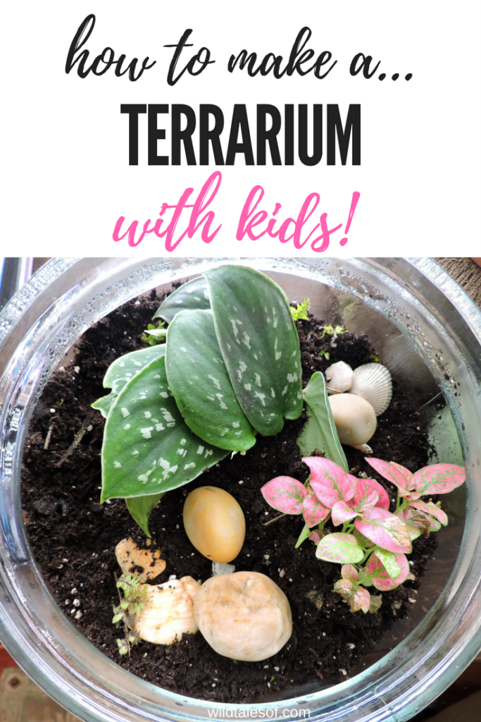 Ever Created A Terrarium For Your Home Id Love To Hear About Lets Chat In The Comments
