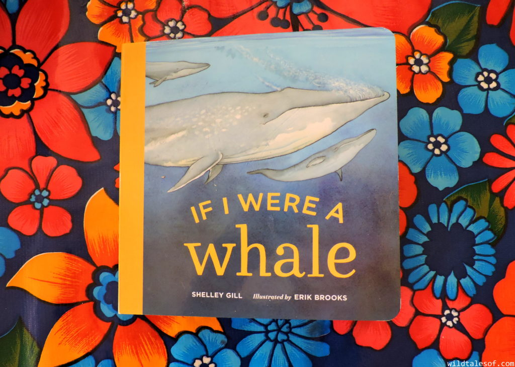 If I Were a Whale by Shelley Gill: Book Review | WildTalesof.com