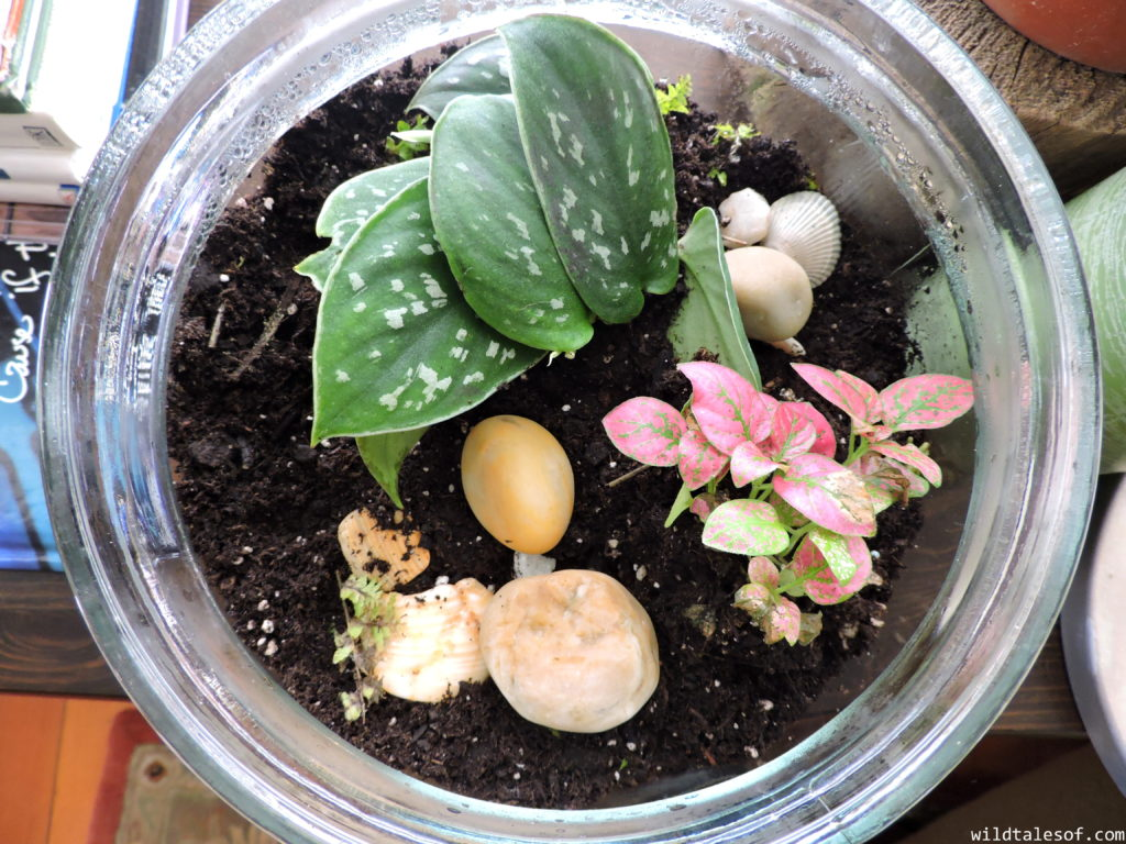 Nature-Based Projects: How to Make a Terrarium | WildTalesof.com