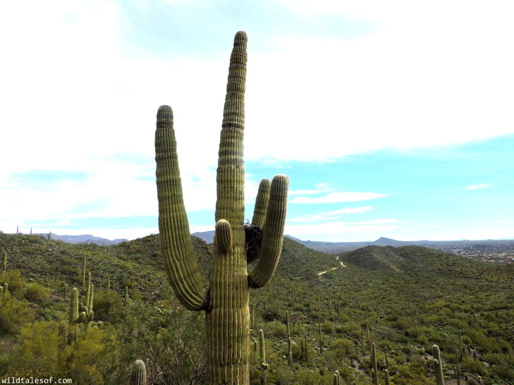 Hiking with Kids: Cave Creek Regional Park near Phoenix, AZ   WildTalesof.com