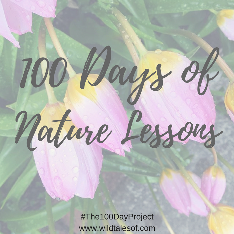100 Days of Nature Lessons/The 100 Day Project | WildTalesof.com