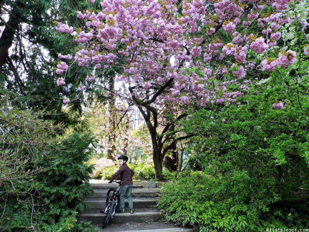 Biking with Kids: Prevelo Alpha Three Review | WildTalesof.com