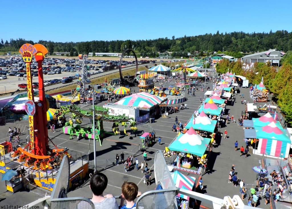 Late Summer Fun: Highlights from Washington's Evergreen State Fair | WildTalesof.com