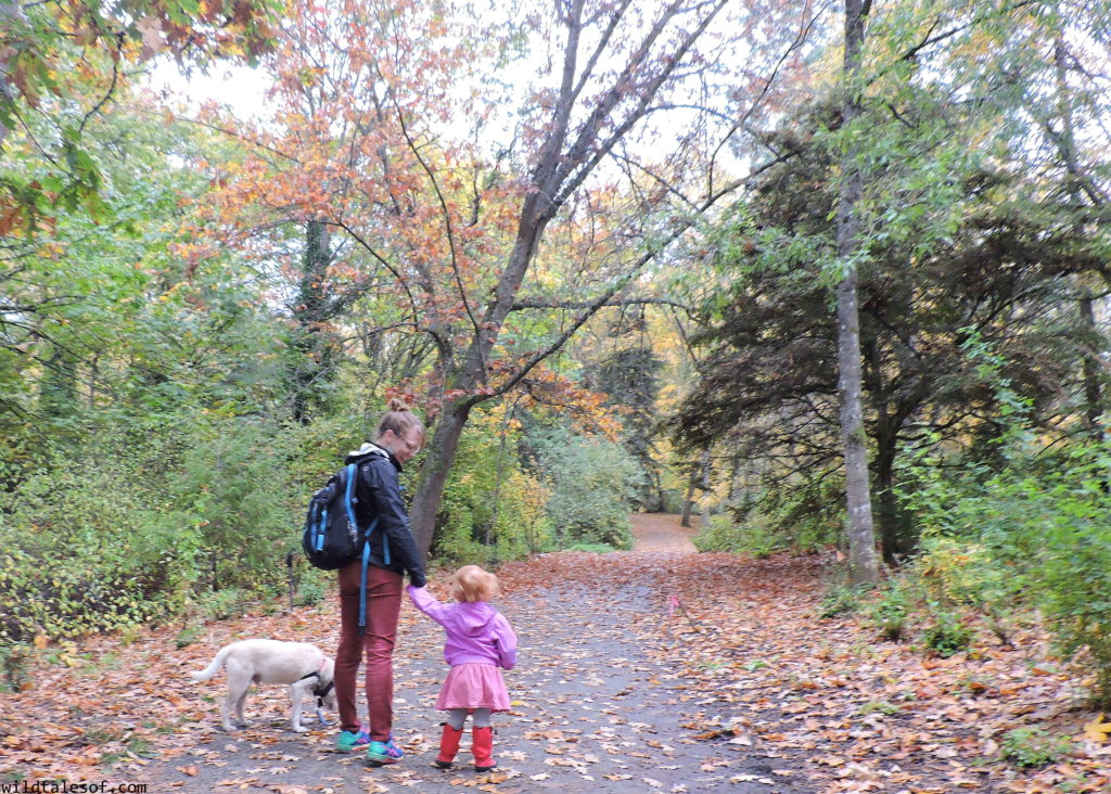Fall Nature Walks: Tips for Fun and Enjoyment with Dr. Scholls® | WildTalesof.com