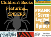Fun Fall Reading: Children's Books Featuring Spiders | WildTalesof.com