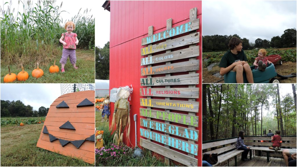 Mother-Daughter Getaway: A Fall Visit to the Charlotte, NC Area | WildTalesof.com