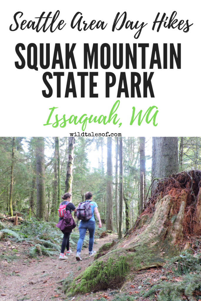 Seattle Area Spring Hiking: Squak Mountain State Park - wildtalesof com